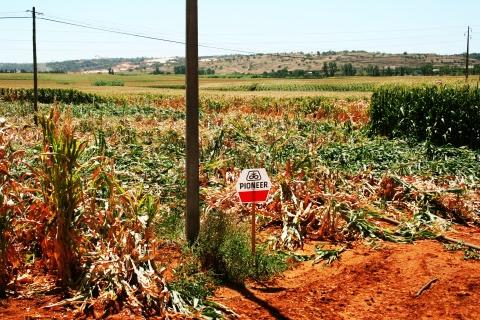 Anti_GMO_Struggle_Portugal_2